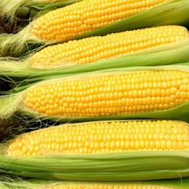 Sweet Corn Moonshine (22)