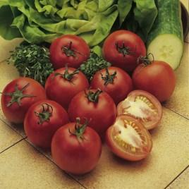Tomato Seeds - Alicante