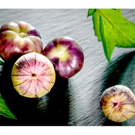 Tomatillo - Purple