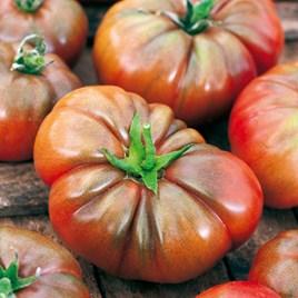 Tomato Grafted Noir De Crimee (3)