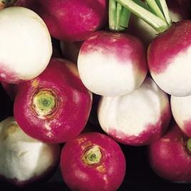 Turnip Seeds - Aramis