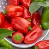 Chilli Pepper Apache (1) 5ltr