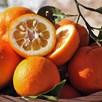 Orange (Citrus) Bigaradier 5L Pot x 1