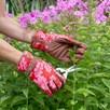 Oak Leaf Gloves