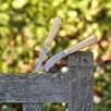 RHS Classic Pruning Knife
