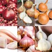 Bumper Autumn Planting Onion/Garlic/Shallot Collection