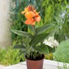 Canna Cannova Orange 2Ltr