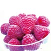 Raspberry Plants - Joan J