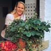 Strawberry Plants - Malwina