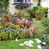 Summer Bedding Value Plug Plants - Lucky Dip