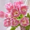 Tulip Pink Fountain