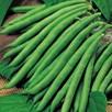 Bean (Dwarf French) Plants - Safari