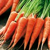 Carrot Seeds - Chantenay Red Cored 2