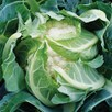Keep Cropping Our Veg Collection