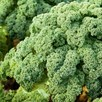 Kale Mixed Collection (21)