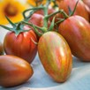 Grafted Tomato Plant - Shimmer