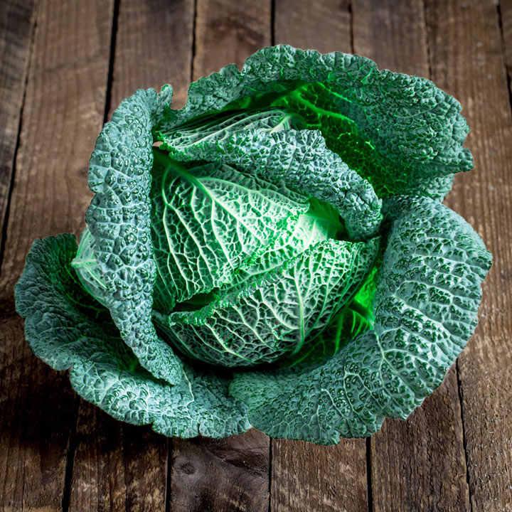 Cabbage Savoy Seeds Cordesa F1 Dobies